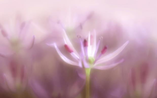 flower-thumbnail-png